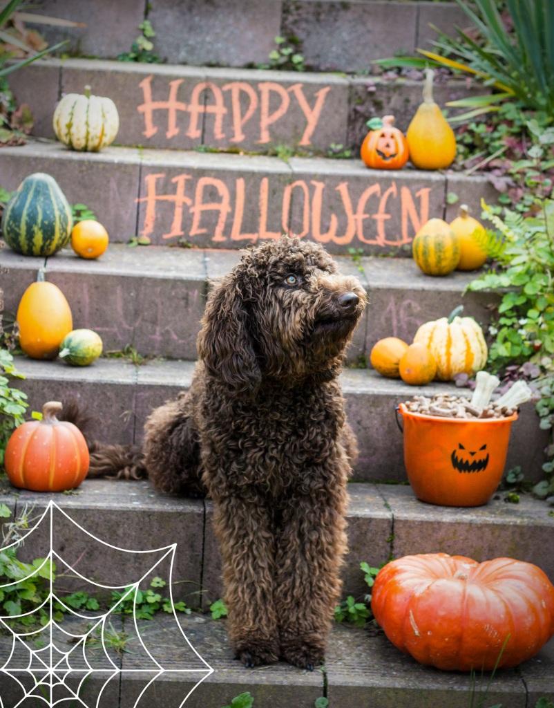 Halloween 1 klein